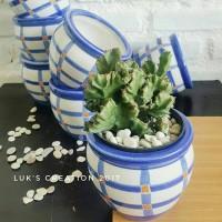 Pot keramik - pot kaktus - pot tanaman - pot succulent