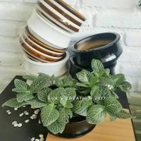 pot keramik - pot tanaman gantung - pot tanaman