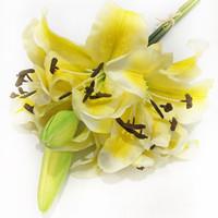Buket Lily Casablanca Kuning