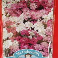 1 Pack 500 Benih Bunga Candytuft Fairy Mixed Mr.Fothergill's