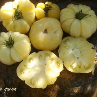 Bibit / Benih / Seeds Sayur Tomat Putih Unik Great White Tomato