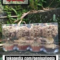 edelweis natural batok (bunga tengah)