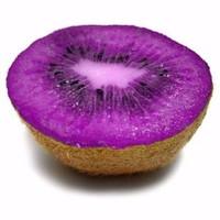 Bibit Biji Benih Buah Kiwi Ungu/wungu/purple Fruit 50 butir
