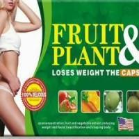 Jual Pelangsing Fruit Plant Murah