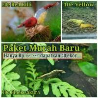 Promo Murah Udang hias Red Rili Black Sakura Aquascape - Combatshrimp