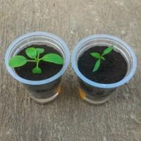 Jual Grow Kit Hidroponik / Metan Media Tanam Semai Praktis / Wick / Organik Murah