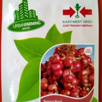 Jual jual bibit Bawang Merah Tuk Tuk Panah Merah Urban Farming Murah