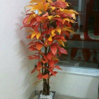 Jual pohon hias| goldhen lucky orange | bahan plastik Murah