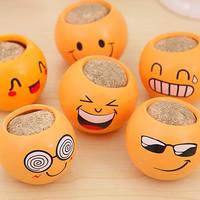 Jual tanaman pot rumput mini emoticon lucu Murah