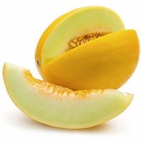 Jual Bibit Biji benih Buah Melon Golden Murah