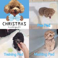 Jual Christmas Underpad Pee Pad Toilet Training Anjing 10 lembar Murah