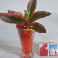 Jual Hidrogel / Hydrogel Dark Red / Merah Tua Murah