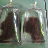 Jual Pakan / Makanan Ikan Hias Cacing Sutra Per Plastik Murah