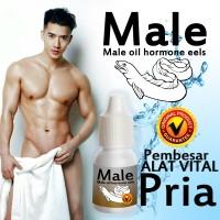 Male Eel Oil Pembesar alat vital pria