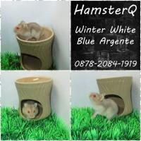 HAMSTER WINTER WHITE BLUE ARGENTE