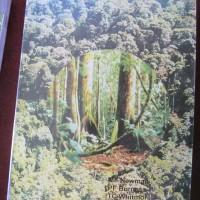 Pedoman Identifikasi Pohon-Pohon Dipterocarpaceae Pulau Kalimantan
