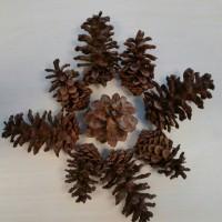 Buah pohon Cemara / Pine Cone | Bahan Kerajinan & dekorasi