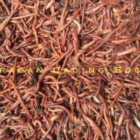 Cacing Lumbricus rubellus kosmetik umpan obat pakan ternak Bogor
