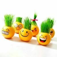 Jual Emoji Plant Grass Doll - Boneka Tanaman Rumput Murah