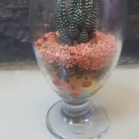Jual sukulen gelas kaca hidrogel/succulent/kaktus/murah/souvenir/hadiah Murah