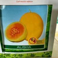 Jual Benih Melon Alisha 400s Murah