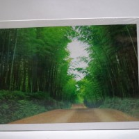 harga Nightilum Jigsaw Puzzle - Bamboo Tunnel - 500 Pcs Tokopedia.com