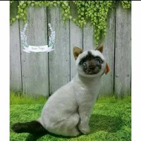 Boneka Kucing Siam Duduk