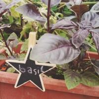 Jual Mini Chalkboard-Papan Tulis Mini Penanda Tanaman-Bintang Murah