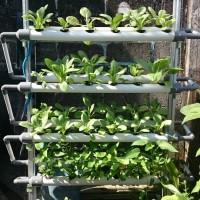 Jual Mini Garden Hydroponic V 4.0 Taman Kebun Hidroponik Besar NFT/ DFT Murah