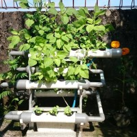 Jual Mini Garden Hydroponic/ Taman Portable DFT Hidroponik V.3.0 Murah
