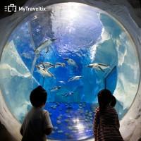 COMBO Sea Life + Madame Tussauds Bangkok (Dewasa)