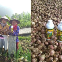 Pupuk Organik Cair Plus Hayati Majemuk Bio Optifarm, volume 1 L