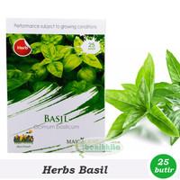 Benih/Bibit Sweet Basil - Kemangi (Maica Leaf)