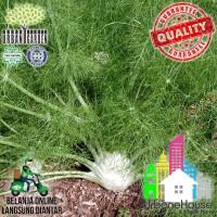 HERBS - Benih FENNEL EURO GREEN IMPORT Bibit tanaman Herba Fennel seed