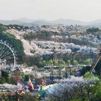 Ticket Everland - Korea - Dewasa