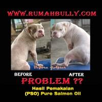 Pure Salmon Oil 518ml