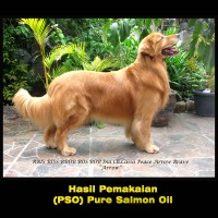 Dog & Cat Raw Food - Pure Salmon Oil 1027ml - Buy 2 Get Free 1 (2+1)