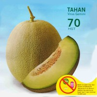 Jual Benih Bibit Melon Hijau Gracia F1 TAhan Virus Murah