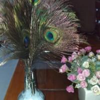 Bulu merak asli / peacock feather