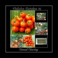 Jual Bibit Tomat Cherry F-1 Hybrid Murah