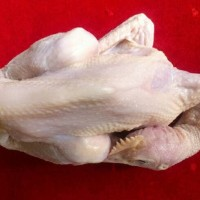 Ayam Pejantan Ekoran 550 gram - 650 gram