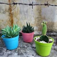 Jual pot tanaman shabby mini paket isi 6pc Murah