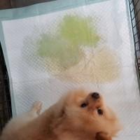 Jual Training Pads / Alas Kandang / Alas Latihan Kencing Anjing / Kucing Murah