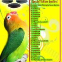 harga Micro Sd Brainsmart Mastering Special Edition Lovebird Tokopedia.com