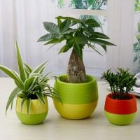 Jual Mini Pot Bunga Hias Kaktus Tanaman - 5pcs Informasi Pro nvv Murah