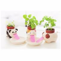 Jual Tanaman pot rumput mini lucu,pot hias,tanaman sedot air,julur lidah Murah