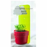 Jual Tanaman pot rumput mini lucu, tanaman hias, tanaman gantung Murah