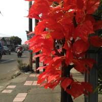 Jual pohon hias | daun orange | bahan plastik Murah