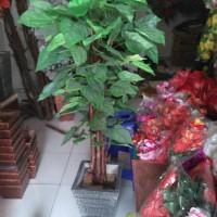 Jual pohon waru hias | warna ijo | bahan plastik Murah