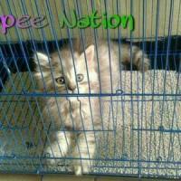 harga Kandang Besi Lipat Kandang Kucing Sugar Glider Kelinci Hamster Size M Tokopedia.com